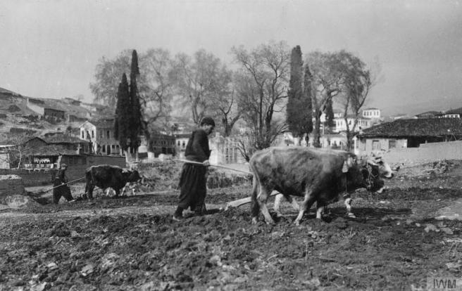 Ploughing with Ox near Skoplje © IWM (Q 86420)